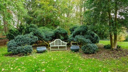 Cloud pruned box at Caldrees Manor, Ickleton. Picture: Simon Baylis for The National Garden Scheme
