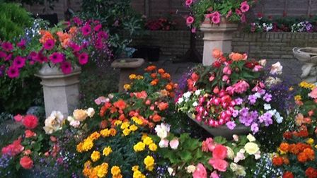 Tom Mcnaughton took this photo of flowers in his Great Paxton garden.