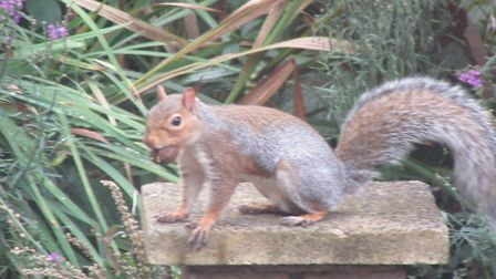 Malcolm Lynn took this photo of a cheeky squirrel in his garden.