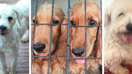 Police are appealing for help to tracea number of dogs, taken from a property in Walpole St. Andrew.