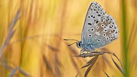 Society member Martin Johnson won the Royston Photographic Society competition for his photo of a butterfly. Picture...