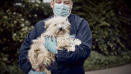 RSPCA said they fear they will face the toughest winter yet PICTURE: RSPCA
