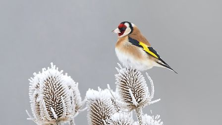 3. Teasels, with their conical seed heads, are just as interesting in winter. Picture: iStock/ PA