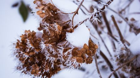 6. Hydrangea flowers may fade to brown but do keep their form for much of the winter. Picture: iStock/ PA