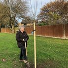 Cllr Jean Matheson planting trees in Little Paxton.