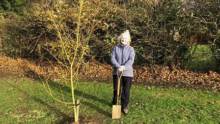 Cllr Kathy Bishop planting trees in Little Paxton.
