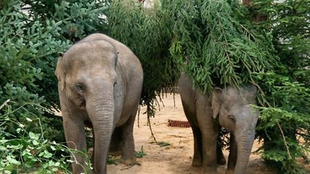 ZSL Whipsnade Zoo elephants are having a great time. Picture: ZSL Whipsnade Zoo