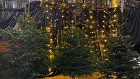 Three green Christmas trees in front of sparkly lights.