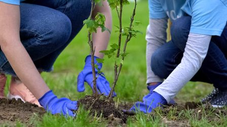 Redbridge Council has reopened its Adopt a Tree Pit scheme, with residents free to apply until December 31. Picture: Mortorti...