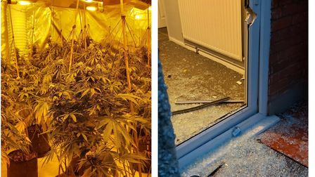 Police busted a cannabis farm in Hainault thanks to a tip off officers from the Safer Neighbourhoods team received.