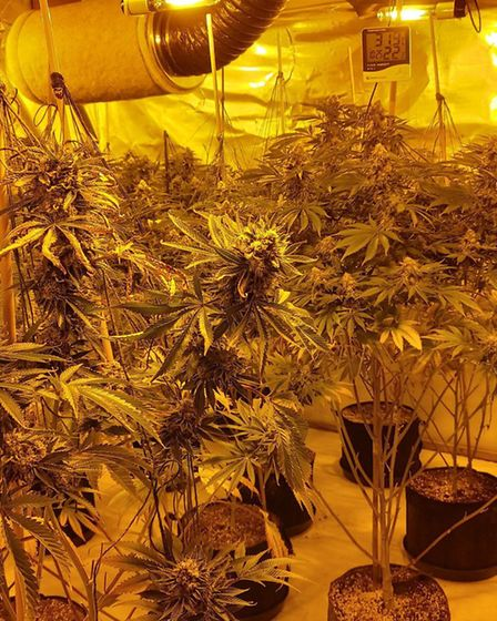 A spokesperson for Hainault MPS called the raid a great success which led to a large amount of cannabis seized from the prope...
