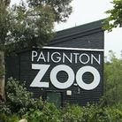 Paignton Zoo reopens on Monday, July 6