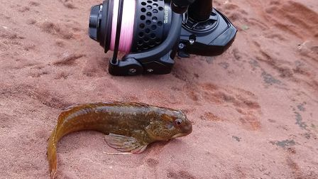 A goby caught by Damien Fryer