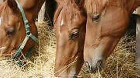 Although much rarer nowadays, horse feed can be the cause of a positive reading