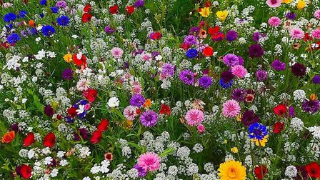 Wild flowers looking magnificent on Torquay seafront. Photo: Stephen Coombes