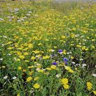 The wildflower meadows in The Byes were highlighted in the report as a success Picture: Brenda Cocke