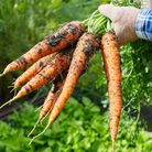 Locally sourced produce Picture: Getty Images