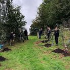 "First trees planted in ""Saving Devon's Treescapes"" project Picture: contributed"