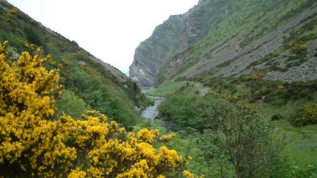 The National Trust appeal is aiming to plant 125,000 trees in North Devon locations such as Heddon V