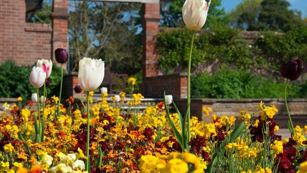 One of the many beautiful floral beds. Picture: Alex Walton Photography