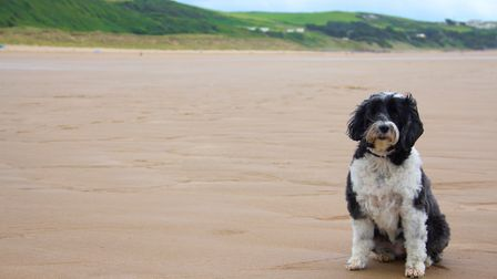 Dogs will not be banned from most North Devon beaches during the summer months, if new proposals are