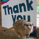 Thank-You From Paignton Zoo