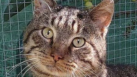 Monty was recently rehomed by the Feline Network