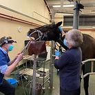 The equine dentist at work