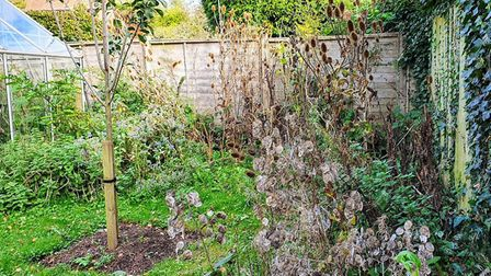 Benefits of a wild patch in your garden Picture: Sheila Meades