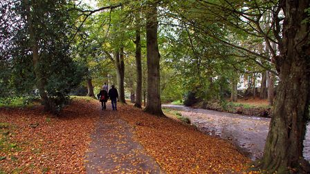 Have you spotted the plant on your walks through The Byes? Picture: Alex Walton