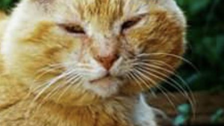 A missing pet causes huge heartache for their owner