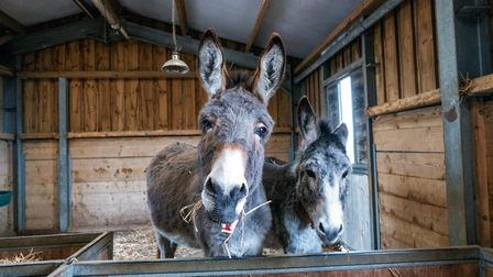 Over the festive period visitors to The Donkey Sanctuary are encouraged to book online as visitor nu