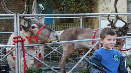 Matteo, age 4, smiles for his photo with the friendly reindeer at Thornhill Primary School.