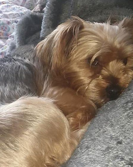 Anyone who sees Miley, is being asked to contact her owner Charis Wilson. Pictures: Charis Wilson / Facebook