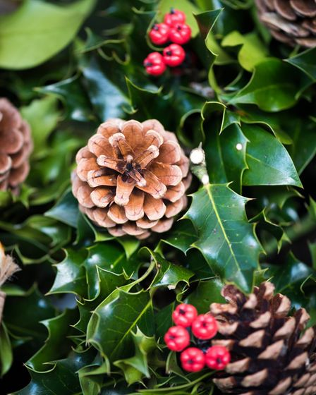Holly foliage, berries and cones make for a fine festive display. Picture: RHS/PA