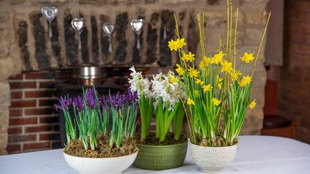 Bowls of bulbs can be a pleasure to plant. Picture: RHS/PA