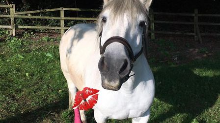 Bonnie is known for her cheekiness and her facial expressions. Picture: Digswell Riding Group RDA