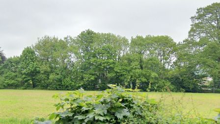 Ash Dieback in Long Park, Sidmouth Picture: Google Maps
