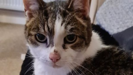 18-year-old tabby cat Boo