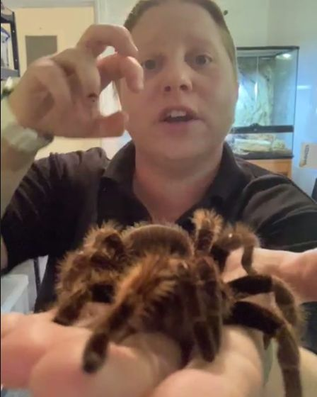 Spider in a hand