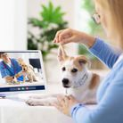 Online consultation with veterinarian. Vet examining animal via video chat. Dog check up during quar