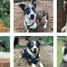 Can you provide a loving forever home for one of the 'six dogs of Christmas' in 2021?
