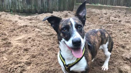 Can you Lizzie a home? She's at Dogs Trust Ilfracombe