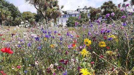 Wild flowers in bloom at Abbey Meadows, Torquay, this summer