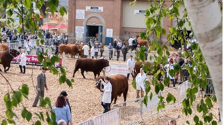 A picture from a previous Devon County Show