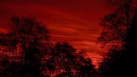 The sun rising behind trees, with the sky a deep red colour