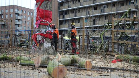 Tree surgeons prepare to cut down The Happy Man Tree.