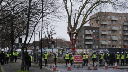 Police and security at the scene of the tree felling.