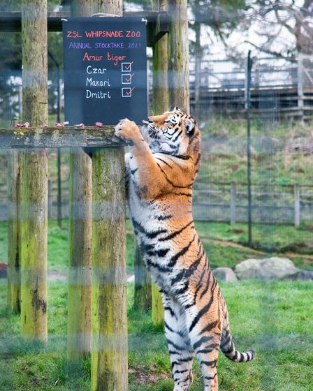 ZSL Whipsnade Zoo's annual stocktake is taking place under lockdown conditions.
