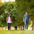 Young couple wearing a protective mask is walking alone with a dog outdoors because of the corona vi